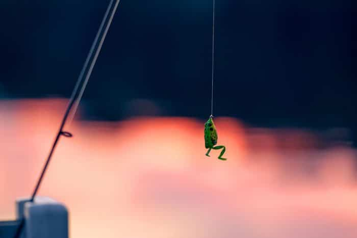 frog lure