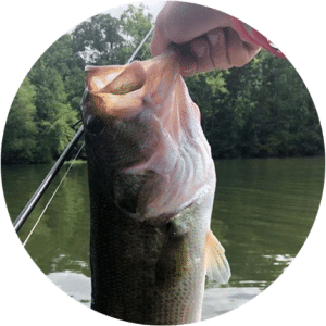 @423bassin Largemouth Bass