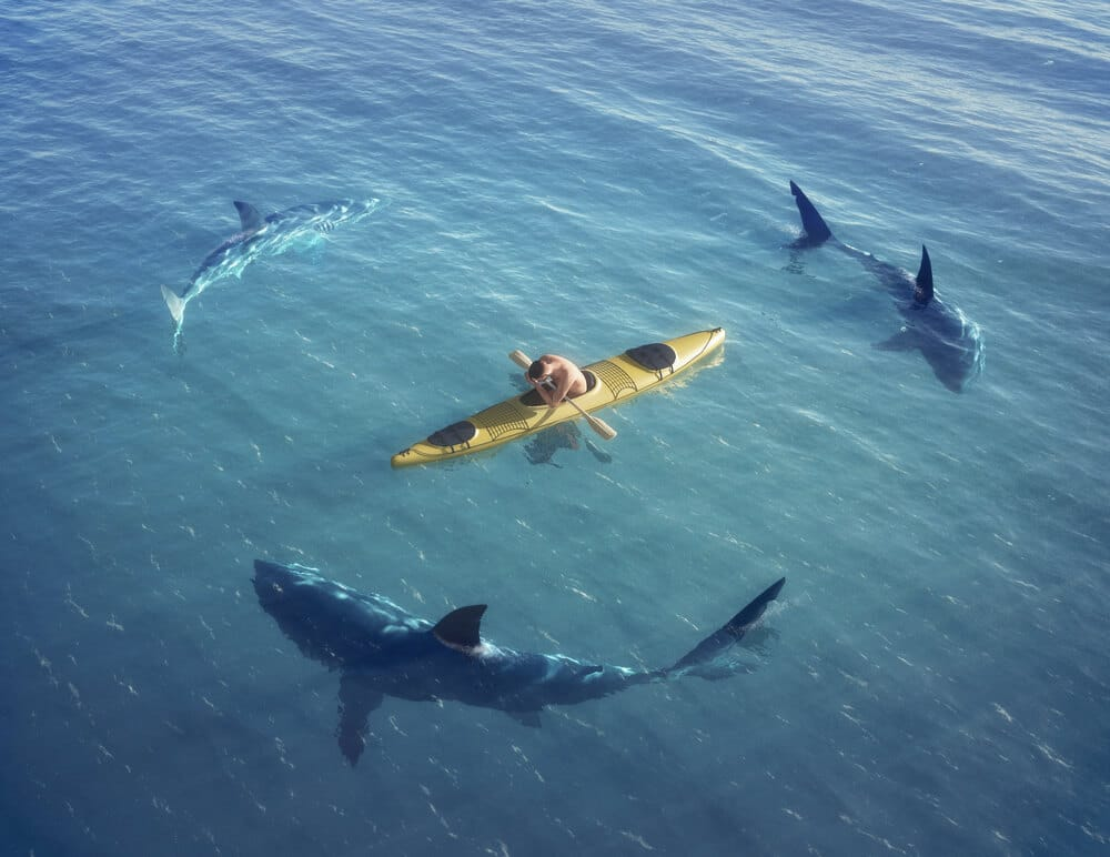 Do Sharks Attack Kayaks